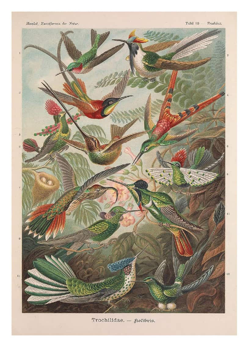 pocztówka rajskie ptaki