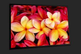 Kwiaty z Bali