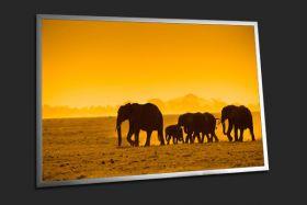 Afrykańskie słonie