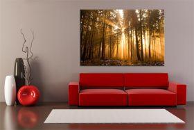 Las w porannych promieniach słońca