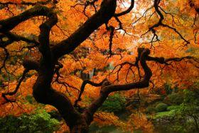 Drzewo jesienią - fotografia