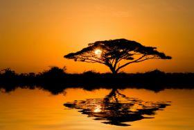 Drzewo, Zachód słońca - zdjęcie na płótnie