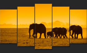 Słonie, Afryka