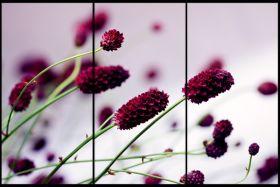 Kwiaty - Lawenda, Prowansja