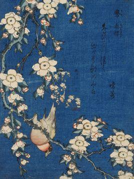 Robin na gałęzi wiśniowych kwiatów - Katsushika Hokusai - reprodukcja