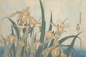 Konik polny i irys - Katsushika Hokusai - reprodukcja