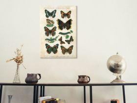 Motyle – Rycina z książki III