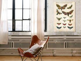 Motyle – Rycina z książki VI