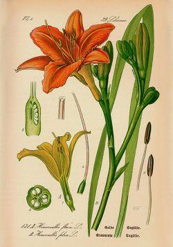 Kwiaty – Rycina z książki III