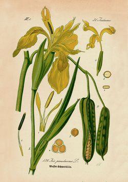 Kwiaty – Rycina z książki IV