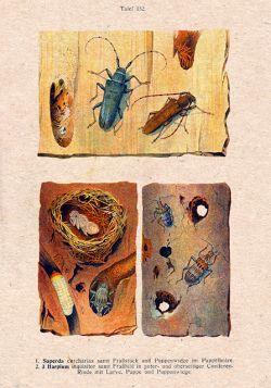 Owady - Rycina z książki VIII