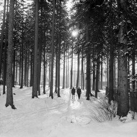 Las w Zakopanem