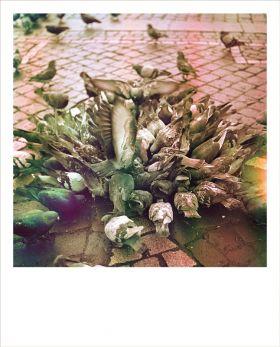 Kartka Polaroid - stado gołębi na Rynku
