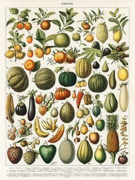Owoce i warzywa  - Plakat Rycina, 40x30 cm