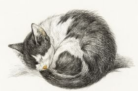 Śpiący kot - magenes