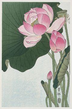 Kwitnące kwiaty lotosu - magnes