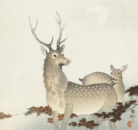 Para jeleni - magnes