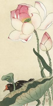 Kwiaty lotosu - magnes