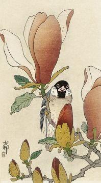 Wróbel na kwitnącej gałęzi magnolii - magnes