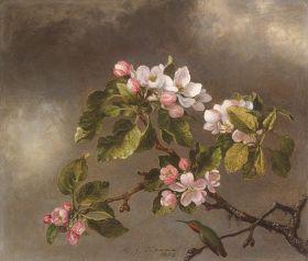 Koliber wśród kwiatów jabłoni, Martin Johnson Heade - magnes