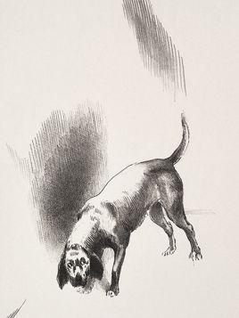 Pies - rysunek vintage