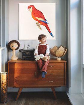 Czerwona papuga - ilustracja vintage