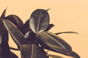 Roślina na brzoskwiniowym tle