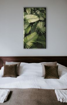 Liście palmy