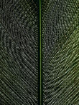 Liść (detal)