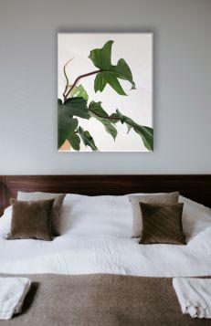 Liście rośliny