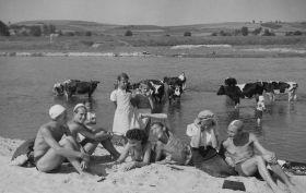 Krowy, plaża nad Wisłą