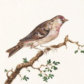Ptak siedzący na gałęzi - ilustracja vintage