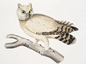 Sowa na gałęzi - ilustracja vintage