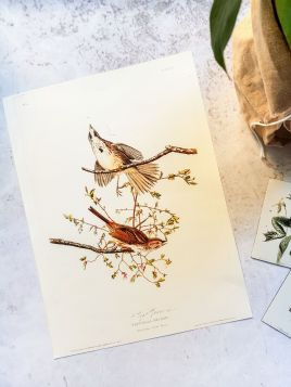 Ptaki I - plakat, rycina
