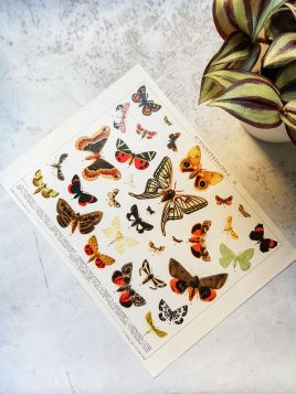 Motyle - plakat, rycina