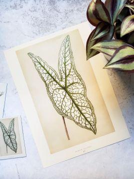 Liść - plakat, roślina