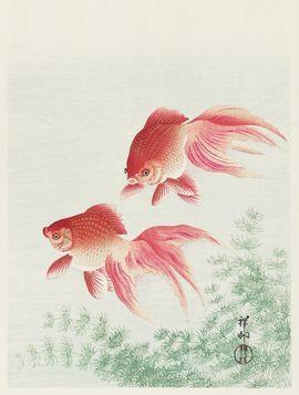 Dwie welonki, złote rybki - ilustracja vintage