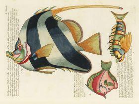 Kolorowe ryby - ilustracja vintage