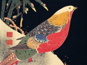Złoty bażant w śniegu - ilustracja vintage
