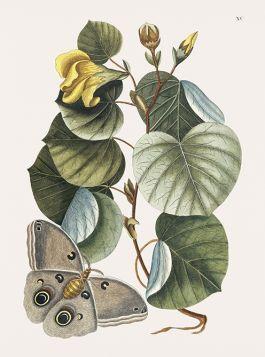 Motyl wśród roślin - ilustracja vintage
