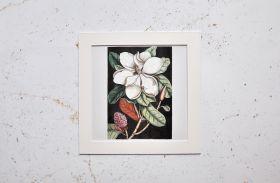 Stara ilustracja, kwiat - zdjęcie z passe-partout