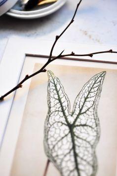 Liść monstery, roślina - zdjęcie z passe-partout
