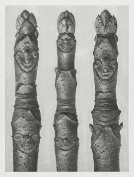 Kasztanowiec drobnokwiatowy  - Stara fotografia, Karl Blossfeldt