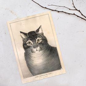 Ulubiony kot - Rycina, Vintage