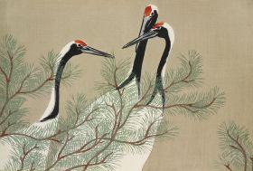 Stara ilustracja żurawie