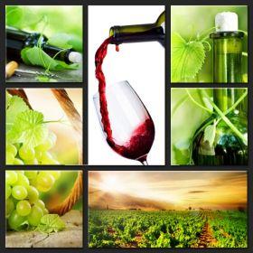 Obrazy  - Winnice