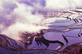 Chiny, tarasy ryżowe