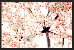 Kwiat bzu