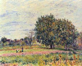Drzewa orzechowe w słońcu, na początku października - Alfred Sisley - reprodukcja