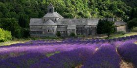 Lawenda,  Abbaye De Senanque, Prowansja